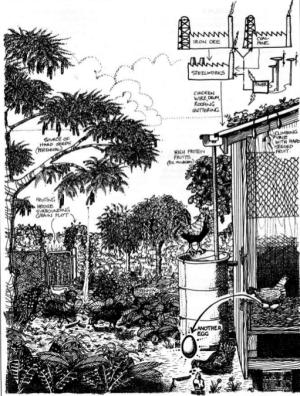Élevage de poule en permaculture (X)